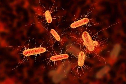 A closeup of bacteria.