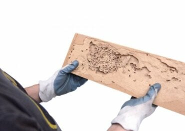 How to Identify the Signs of Woodworm