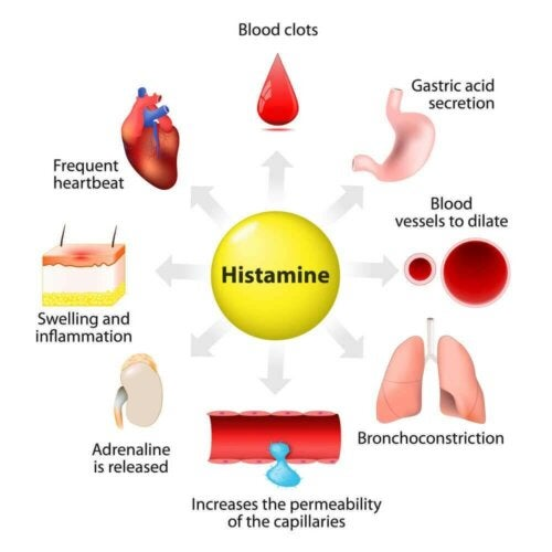 Histamine: Synthesis, Release and Functions