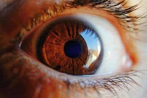 Find Out How the Eye Cleans Itself