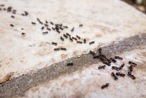 A line of ants.