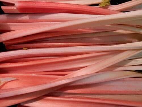 Garden Rhubarb: Benefits and Side Effects