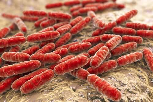 A cluster of bacteria.