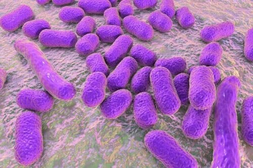 A group of bacteria on a surface.