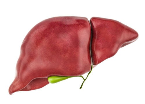 The liver, a key organ for removing toxins from the body.