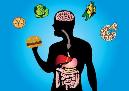 Graphic showing foods and digestive system for metabolic flexibility.