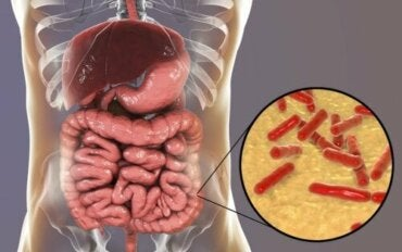 How to Tell if the Gut Microbiota is Damaged