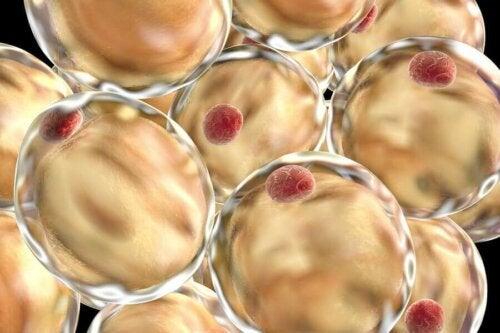 Lipids in the organism.