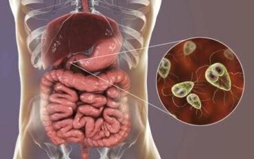 The Symptoms and Treatment of Giardiasis
