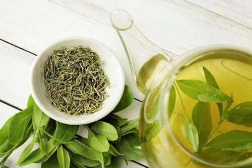 Did You Know that Green Tea Increases Longevity?
