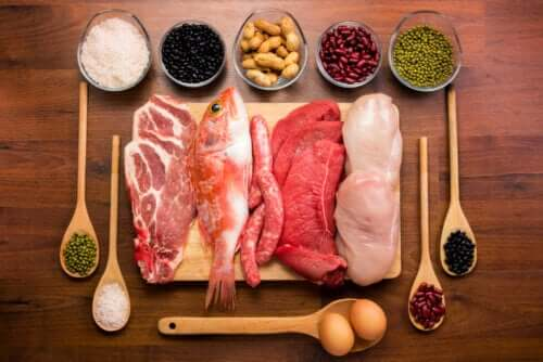 All About the Function of Proteins in the Body