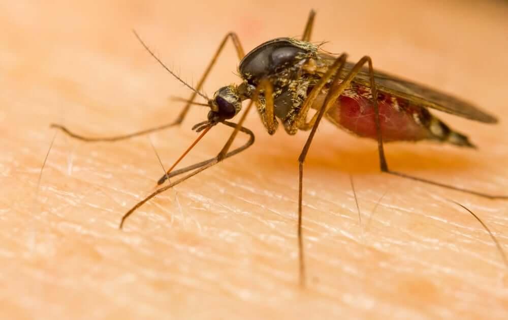 Mosquitos can spread malaria.