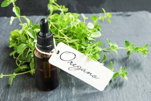 How to Prepare Homemade Oregano Oil and its Benefits
