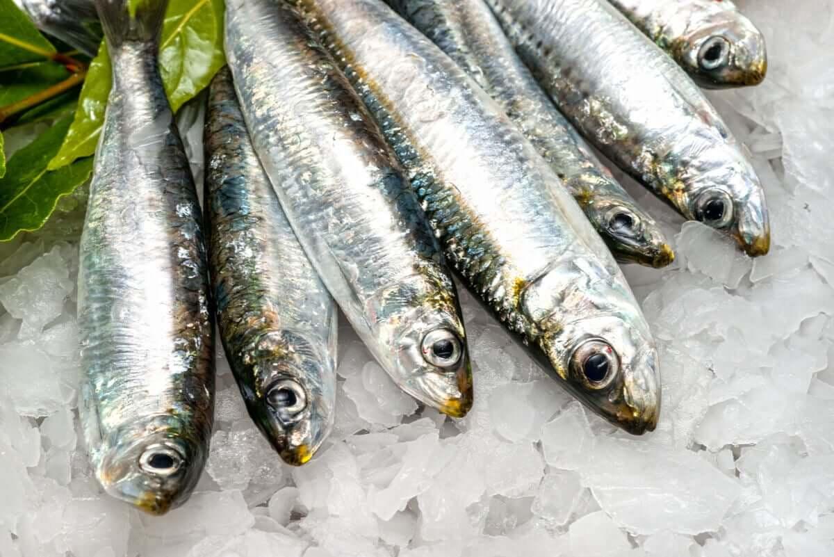 Some sardines.