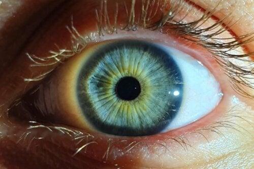A colorful eye.
