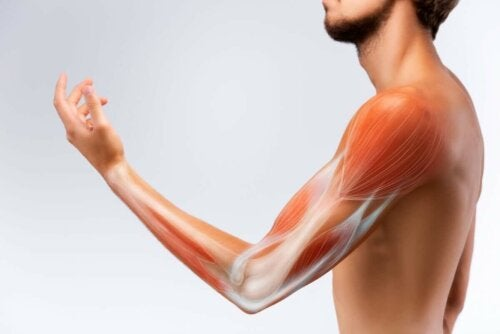 An arm with visible muscles.