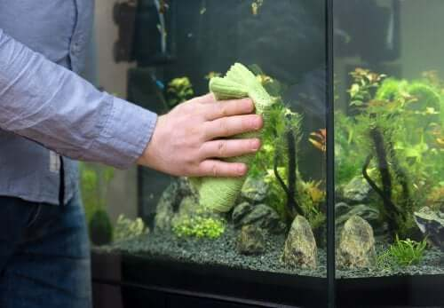 How to Easily Clean a Fish Tank