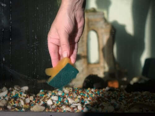 Sponge cleaning a fish tank