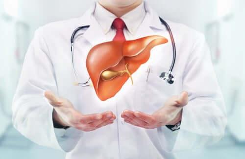 A doctor with a digital representation of a liver.