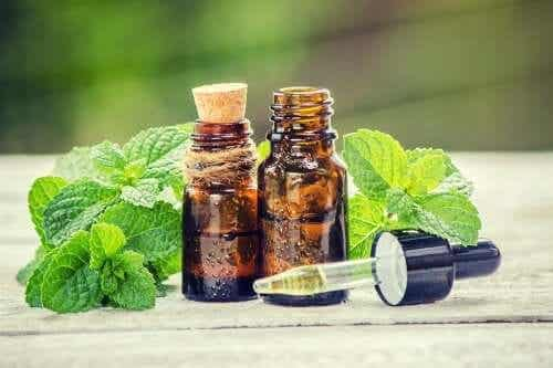 Rosemary and Nettle Treatment for Your Hair