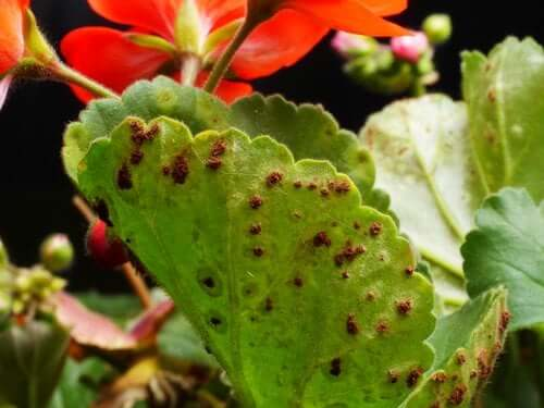 Plant Pests and Diseases