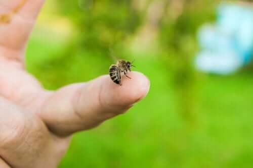4 Essential Oils to Soothe Bee Stings