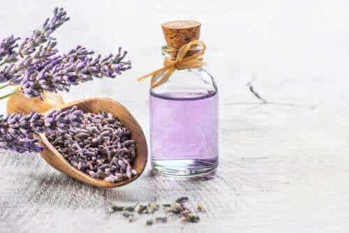 The 6 Best Medicinal Plants with Scientific Proof
