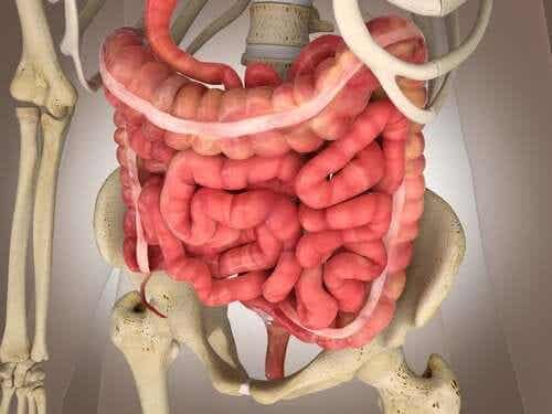 Mesenteric Ischemia: Diagnostic Exams and Treatments