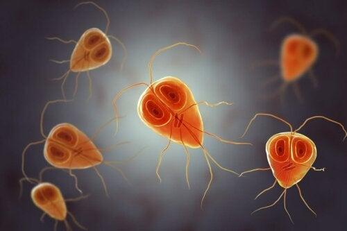Protozoa.
