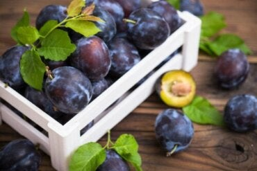 Discover the Different Types and Varieties of Plums