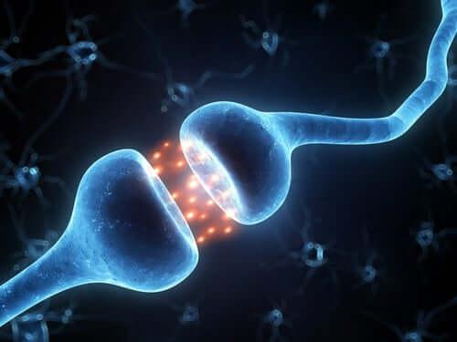 A neuronal connection.