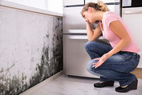 Can Mold in the House Lead to Health Problems?