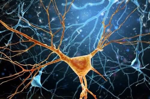 Von Economo Neurons - Cells for Socializing