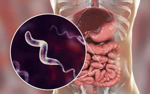 Characteristics of Campylobacter Infections