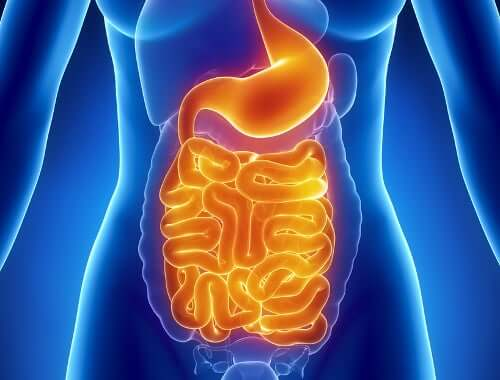 An illustration of a digestive system.