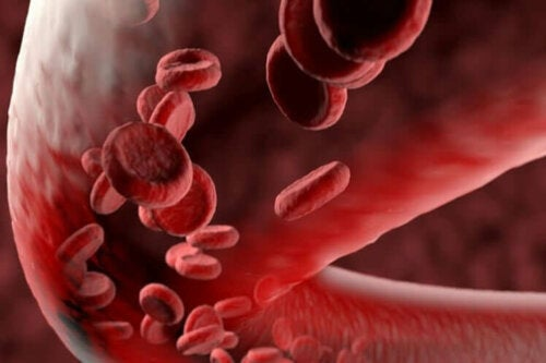 Enlarged view of red blood platelets.