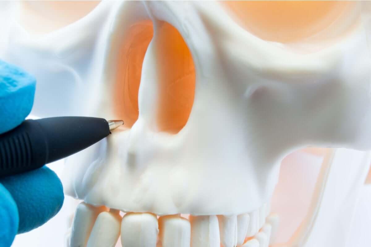 The nasal cavities.