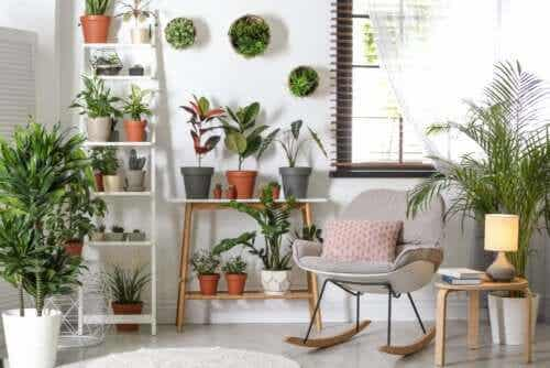 Robust Plants that Don't Require a Lot of Care