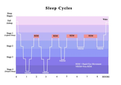 A chart of the sleep cycles.