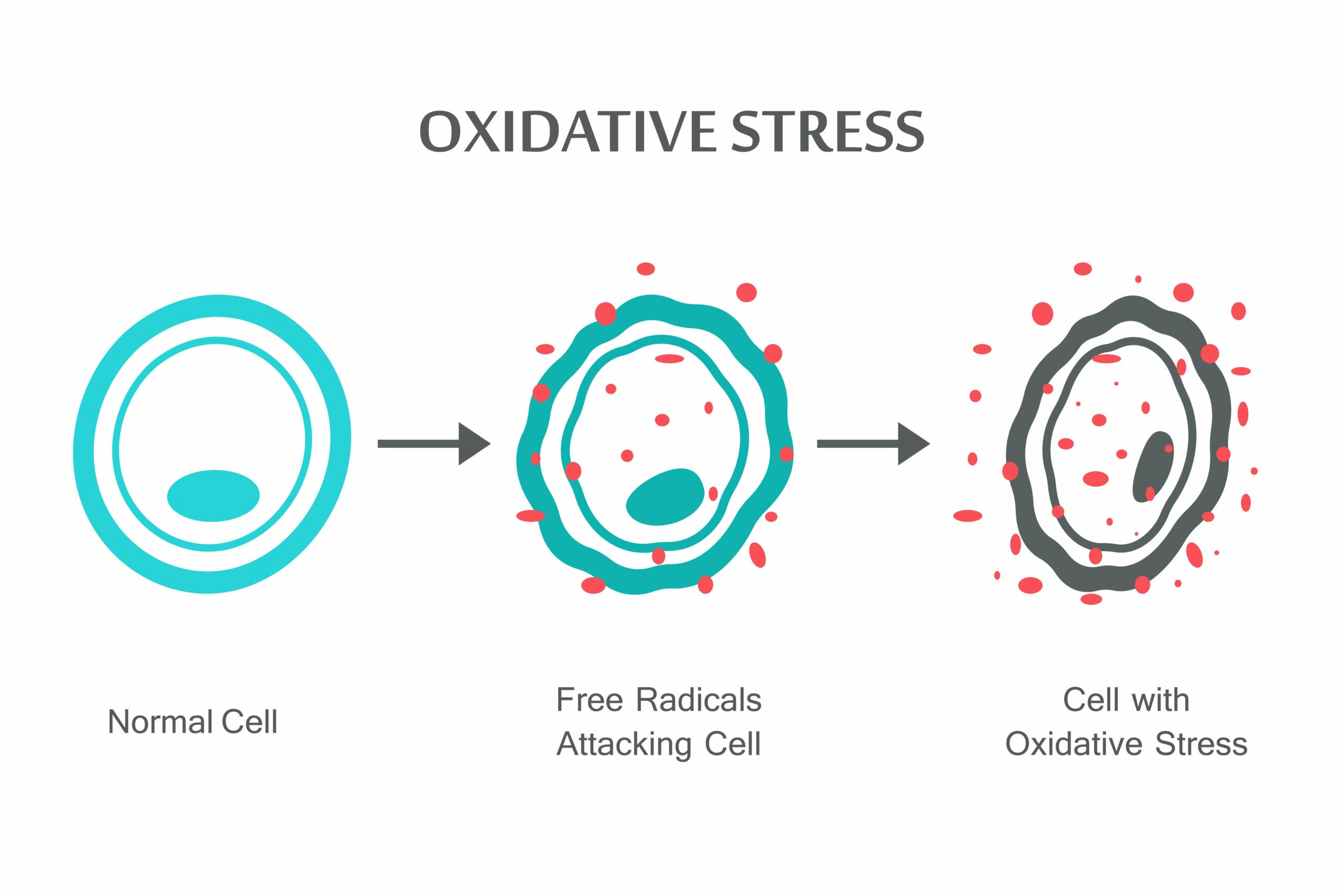 Oxidative stress on the cells.