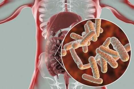 Intestinal microbial