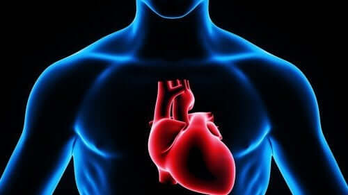 The human heart.