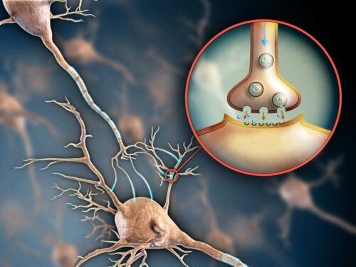 Receptors in the body.