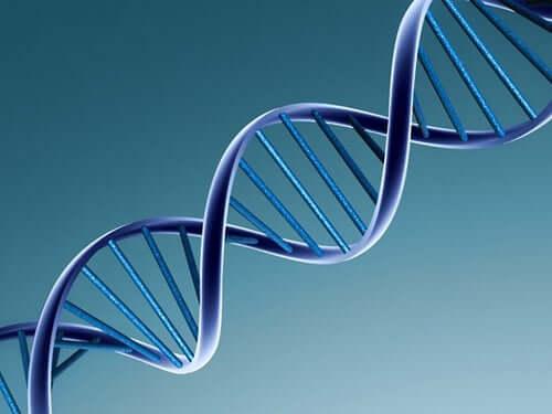 A DNA chain.