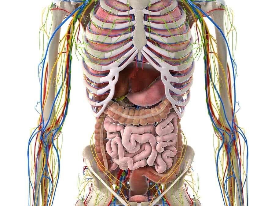 A human body diagram.