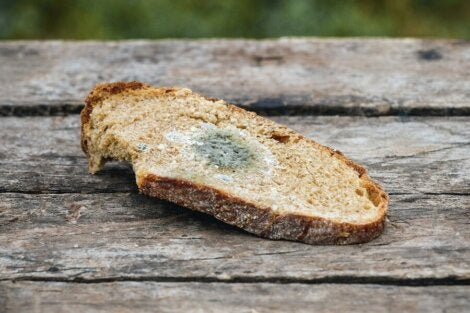 A slice of moldy bread.