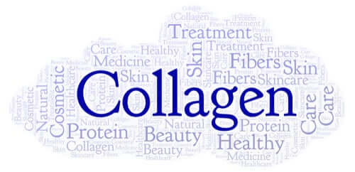 The Purpose and Sources of Collagen