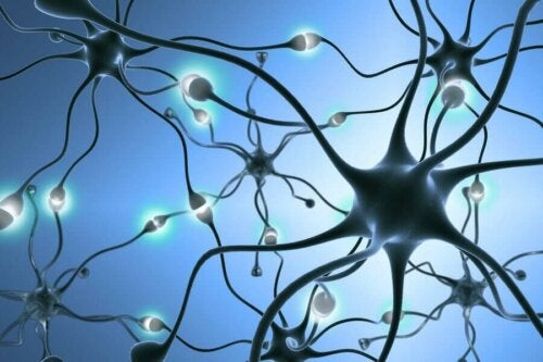 A circuit of neurons.