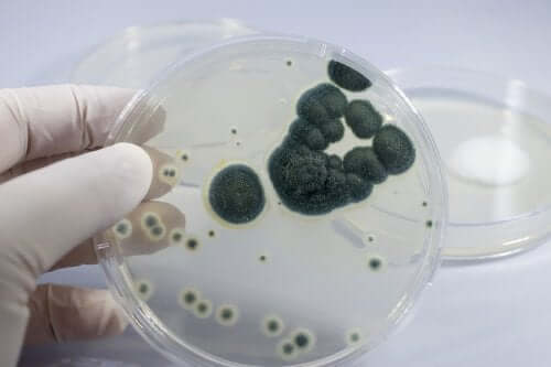 A hand holding a petri dish.