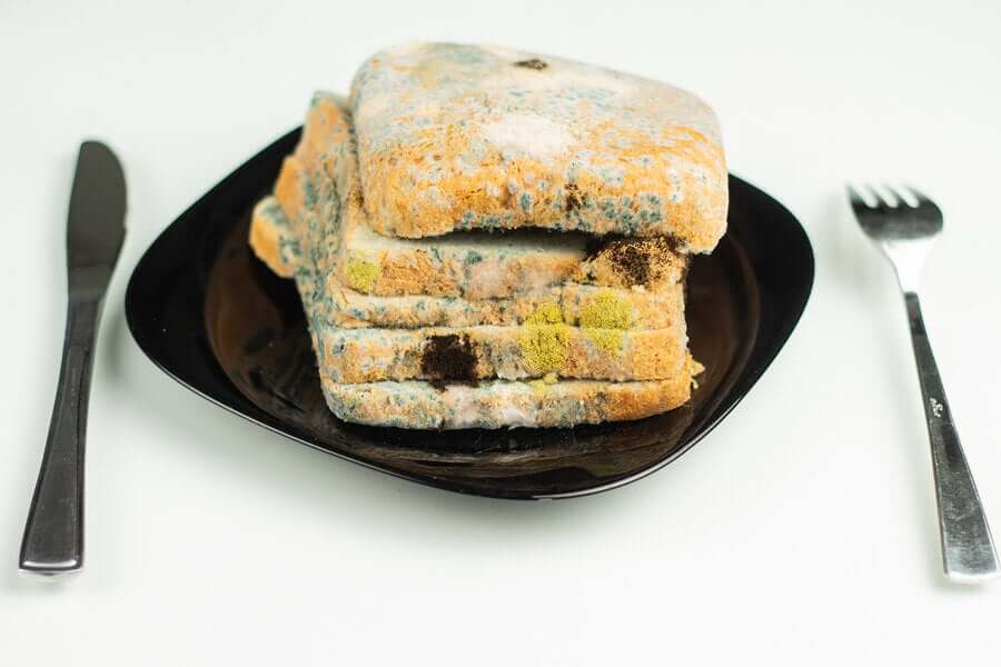 Bread covered in mold